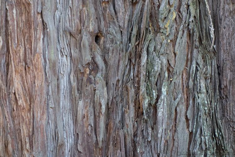 redwood textures