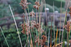 behind the grasses