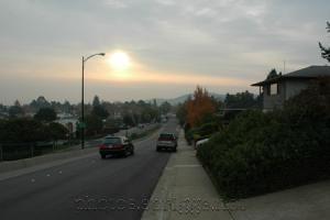 autumn morning on flea street