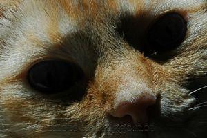 furry face