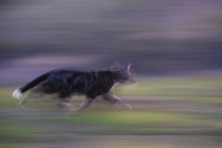 moggy in motion