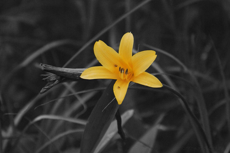 orange flower in monochrome