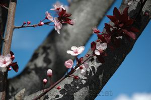 blossoms and branch