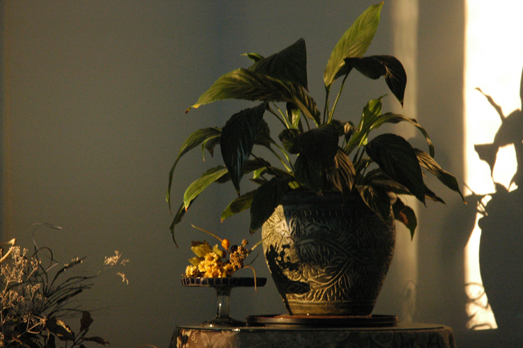 plant and shadow
