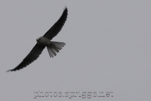 kite in-flight