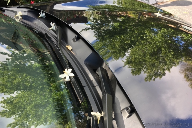 roadster with flowers