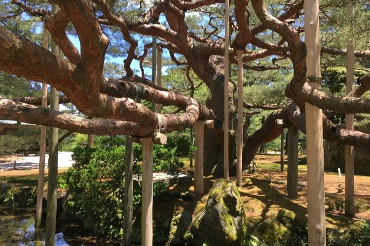 tree crutches